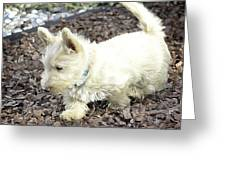 The Wheaten Pup Greeting Card