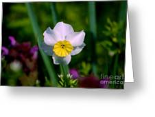 The White And Yellow Daffodil Greeting Card