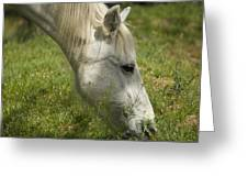 The White Mare  Greeting Card