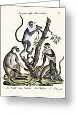The White-nosed Monkey Greeting Card