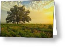 The White Oak Tree Greeting Card