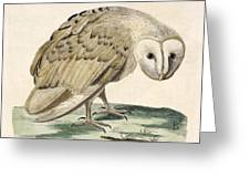 The White Owl Greeting Card