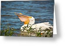 The White Pelican Greeting Card