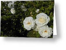 The White Rose Is A Dove Greeting Card by Kay Gilley