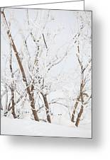 The Whites Of Winter Greeting Card