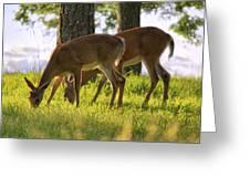 The Whitetail Deer Of Mt. Nebo - Arkansas Greeting Card