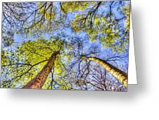 The Wild Forest Greeting Card