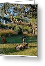 The Wildebeest Greeting Card