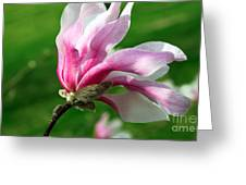 The Windblown Pink Magnolia 1 - Flora - Tree - Spring - Garden Greeting Card