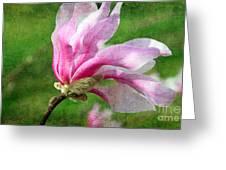 The Windblown Pink Magnolia - Flora - Tree - Spring - Garden Greeting Card