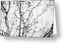 The Winter Pear Tree In Black And White Greeting Card