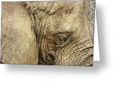 The Wise Old Elephant Greeting Card