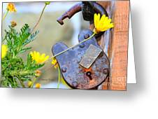 The Wise Owl Padlock - Cambria California  Greeting Card