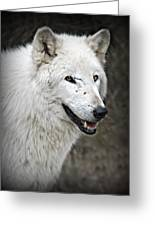 The Wolf. Greeting Card