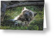 The Wolverine Skunk Bear Happy Face Greeting Card
