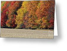 The Wonder Of Fall Greeting Card