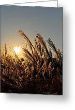 The Wonder Of The Setting Sun Greeting Card