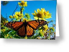 The Wonderful Monarch 3 Greeting Card