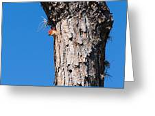 The Woodpecker Is In Greeting Card