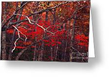 The Woods Aflame In Red Greeting Card
