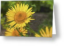 The Yellow One Greeting Card