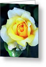 The Yellow Rose Palm Springs Greeting Card