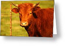 The Young Bull Greeting Card by Adam Dowling
