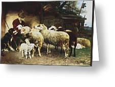 The Young Shepherd Greeting Card