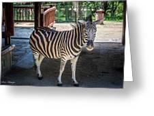 The Zebra Greeting Card