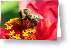 The Zinnia And The Bee Greeting Card