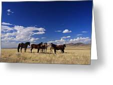 Their Desert Home Greeting Card