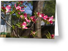 Them Cheery Little Dogwoods Greeting Card