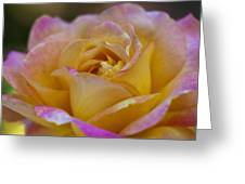 There's Nothing Like The Beauty Of A Rose  Greeting Card