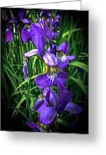 Colors Of Iris Greeting Card