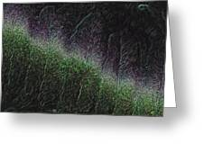 They Grow At Night Greeting Card
