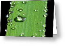 They Never Let Poor Rain Drop Join In Any Rain Drop Games Greeting Card
