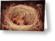 They've Hatched Greeting Card