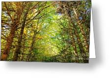 Thick Forest Hdr Greeting Card