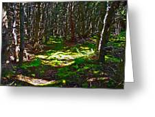 Thicket-like Woods And Spongy Moss Near Lobster Cove In Gros Mor Greeting Card