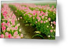 Think Pink Greeting Card by Nick  Boren