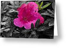 Thinking In Pink Greeting Card