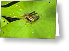 Thirsty Bee On Waterlily Greeting Card