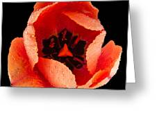 This Dordogne Tulip Greeting Card