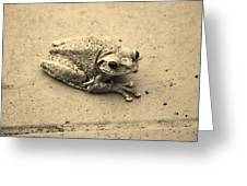 This Old Frog Greeting Card