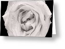 This White Rose Greeting Card