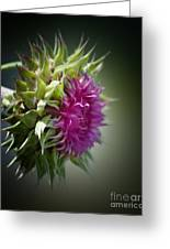 Thistle 14-3 Greeting Card