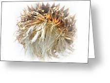 Thistle Abstract 14-1 Greeting Card