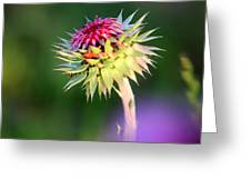 Thistle And Company Greeting Card