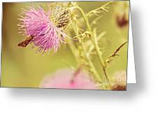 Thistle And Friend Greeting Card