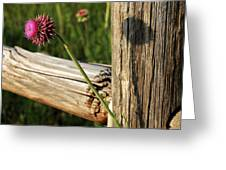 Thistle And Shadow Greeting Card